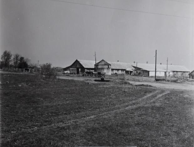 деревня Черемиска ферма